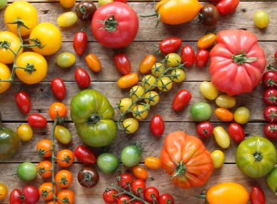 Isle of Wight Tomatoes; tomato; The Tomato Stall; fresh produce; content marketing; food pr;