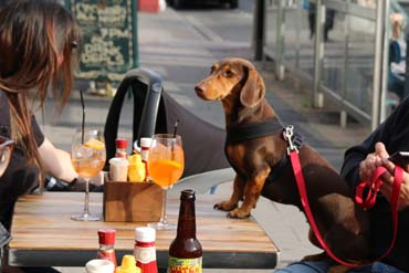 A sausage dog outside at the hubbox Bristol launch 2017